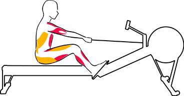 the recovery stage with rowing machine